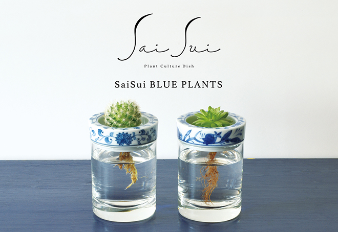 Sai Sui BLUE PLANTS